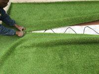 Grass Image 4