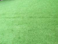 grass Image 6